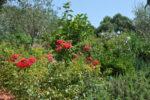 Des arbustes, des fleurs