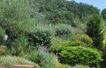 Des arbres, des arbustes, des fleurs