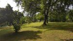 De la pelouse, des arbres