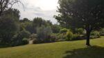 Lawn, trees