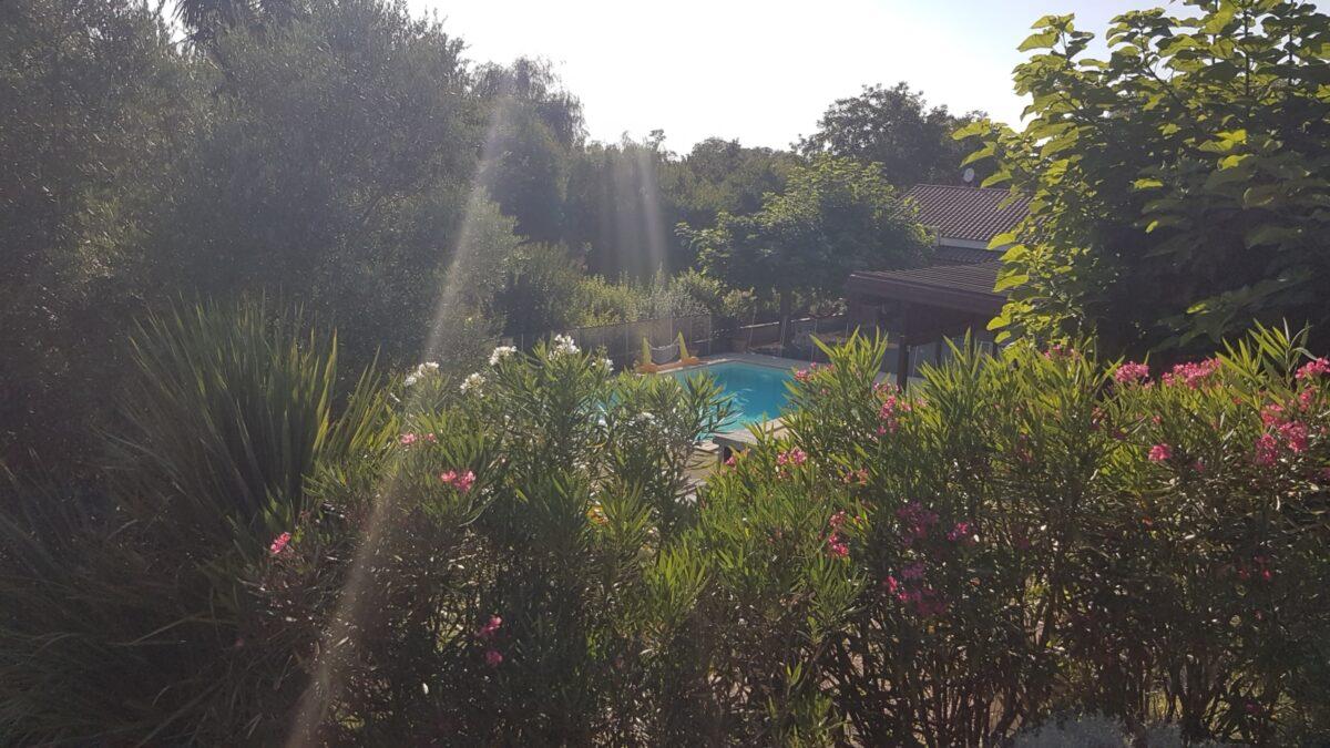 Des arbres, une piscine