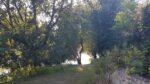 Des arbres, un chemin une rivière