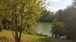 Des arbres, une rivière