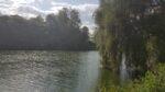 Une rivière, des arbres