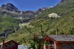 Des fleurs, une maison, des montagnes