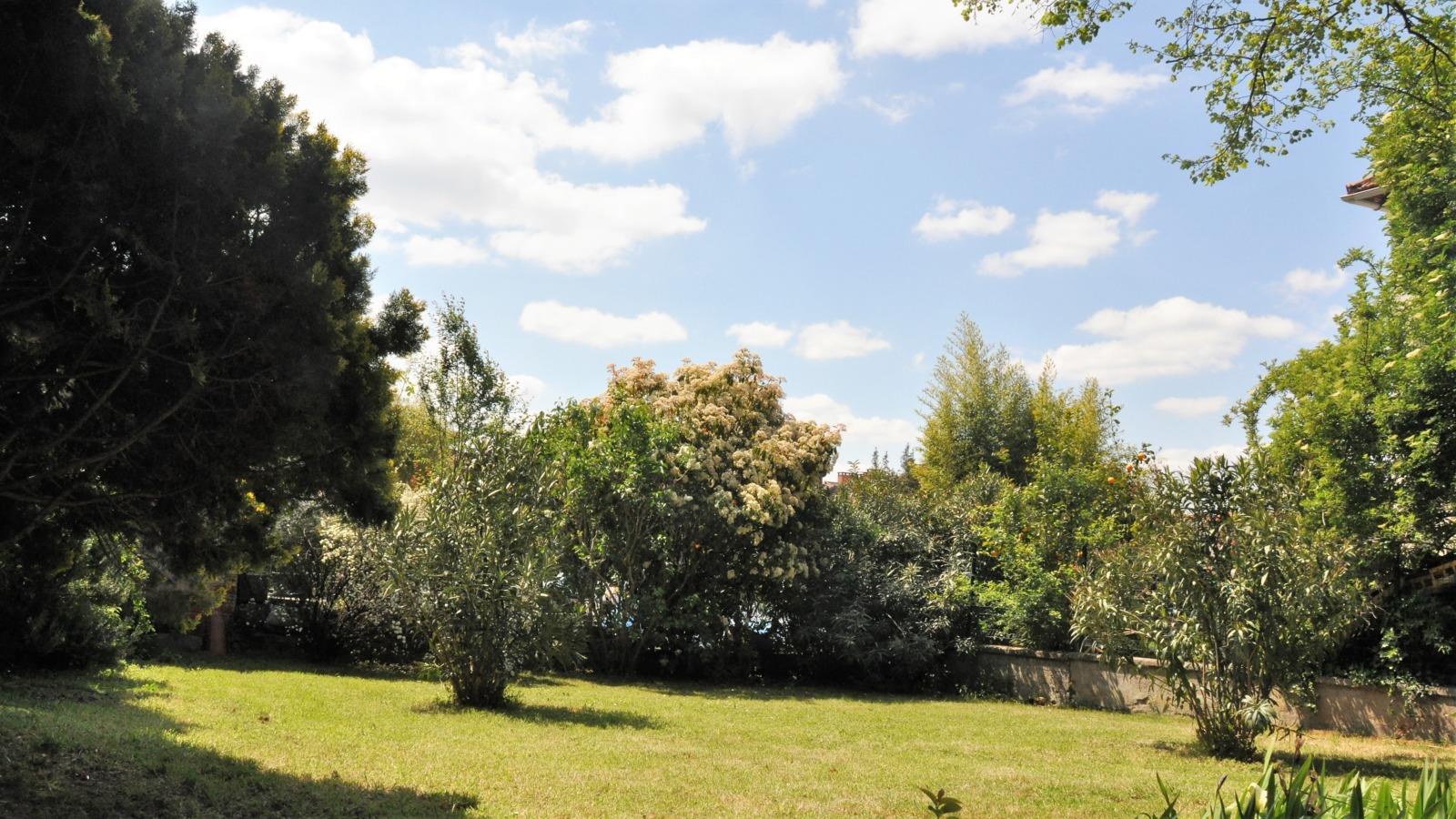 des arbres, de la pelouse, un muret